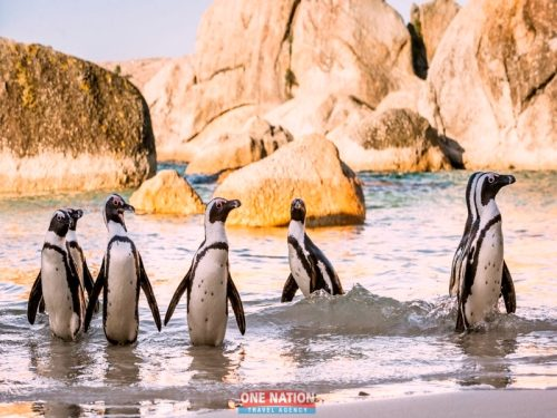 Full-Day Cape Point, Seal Island And Boulders Penguin Sanctuary Tour from Cape Town